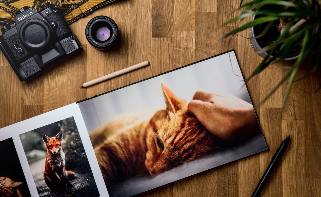 كيفية إنشاء صور انستجرام مميزة للترويج لعلامتك التجارية